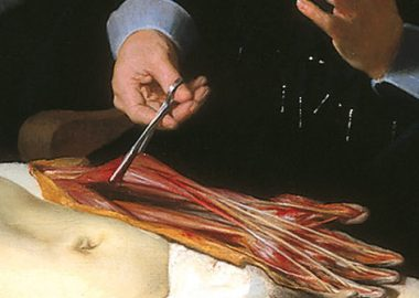 Courtney Lee Malpass Reviews Nina Siegal's Novel The Anatomy Lesson